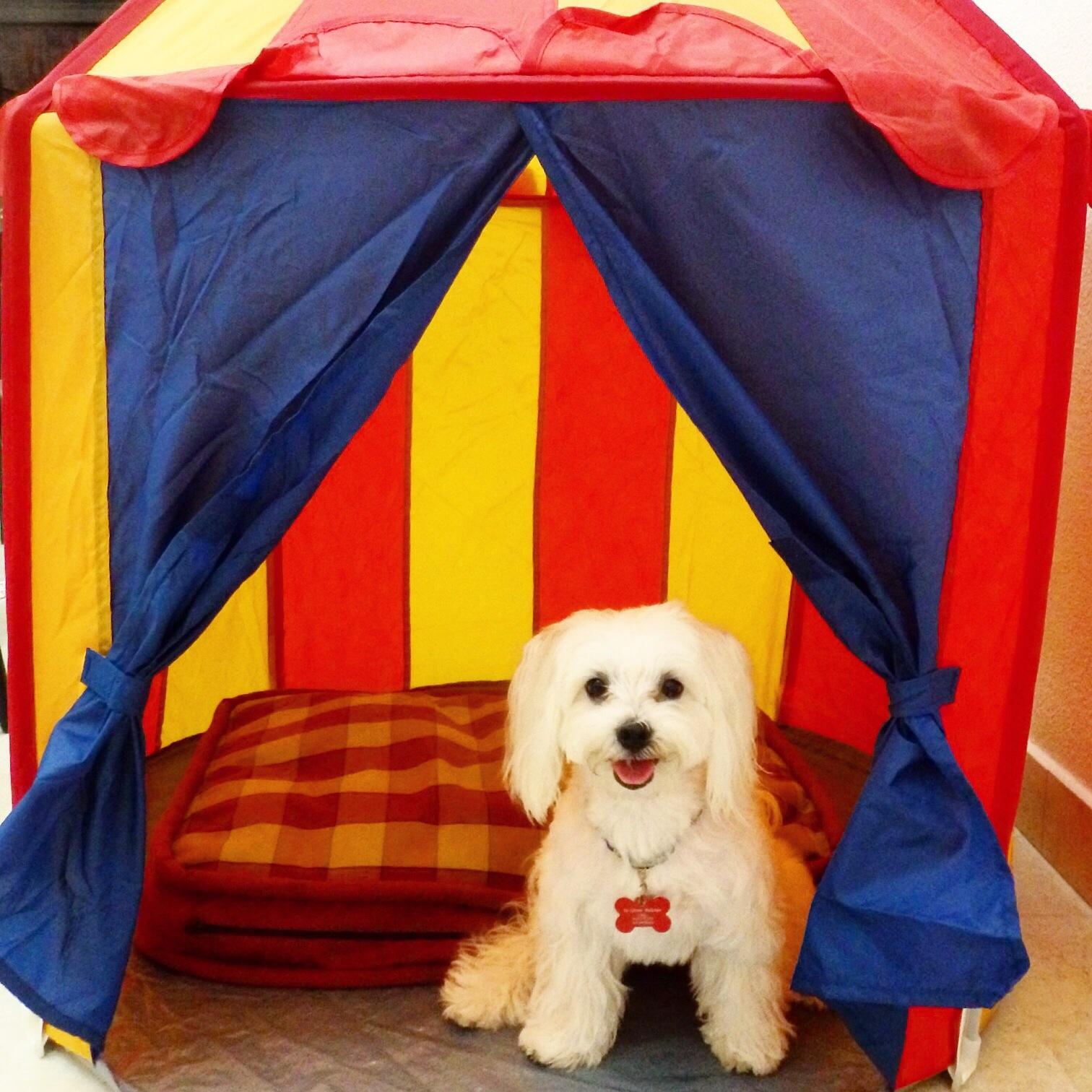 Bed Tents Ikea